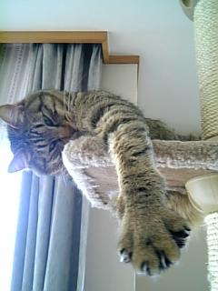 image/catlife-2006-03-24T09:09:25-1.jpg