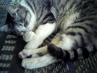image/catlife-2006-04-13T13:14:16-1.jpg