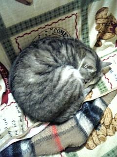 image/catlife-2006-04-22T00:46:01-1.jpg