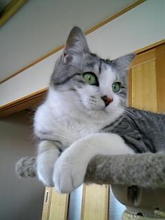 image/catlife-2006-04-24T16:31:54-1.jpg