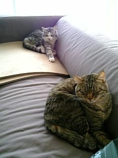 image/catlife-2006-04-27T12:20:25-1.jpg