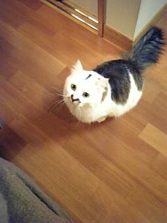 image/catlife-2006-04-28T19:44:09-1.jpg