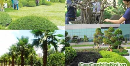 Quy trình chăm sóc cây cho thuê