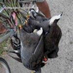 2010_0507_birds