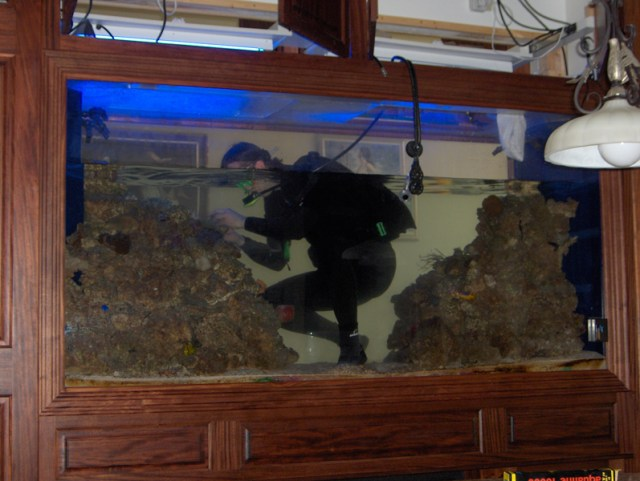 Aquarium Maintenance: We make owning an aquarium easy with hassle free