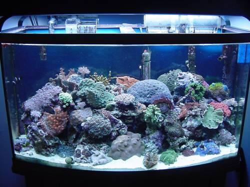 salt water aquarium lighting