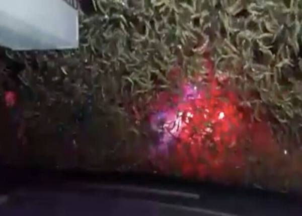 VIDEO: IDOT Uses Snowplows To Clear Horrifying Number of Mayflies From Road