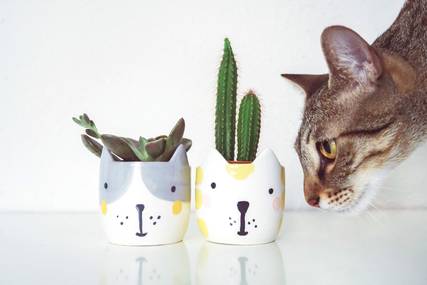 Sparkling Houseplants That Are Safe Cats Dogs Real Are Haworthia Succulents Poisonous To Cats Are Jade Succulents Poisonous To Cats houzz-03 Are Succulents Poisonous To Cats
