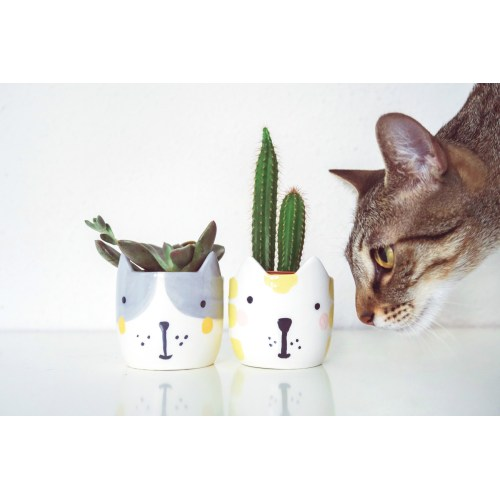 Medium Crop Of Are Succulents Poisonous To Cats