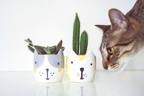 Medium Of Are Succulents Poisonous To Cats