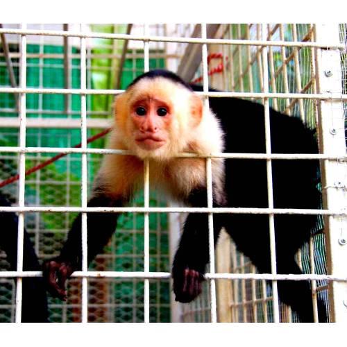 Medium Crop Of Max The Monkey