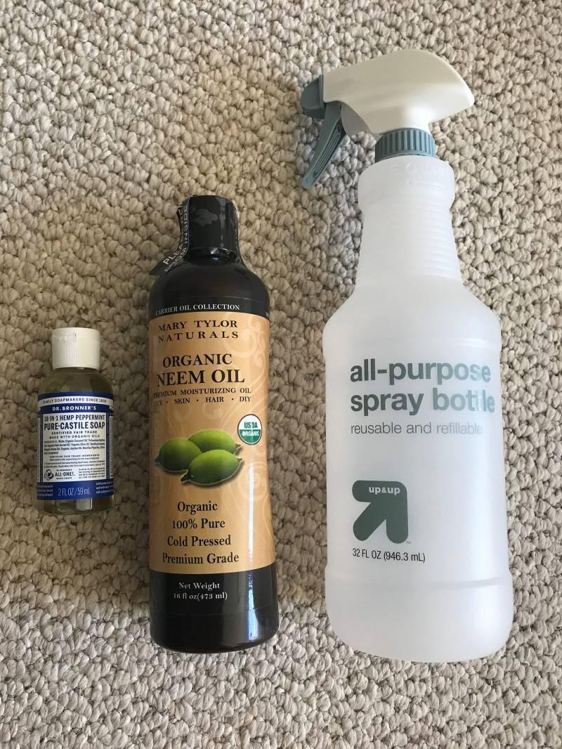 Large Of Garden Safe Neem Oil