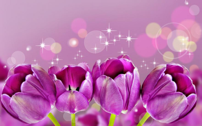flowers live wallpapers:tulips 4.1.1 APK Download - Android Personalization Apps
