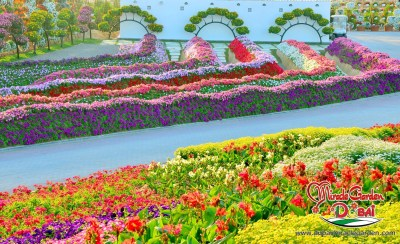 Dubai Miracle Garden: The World's Biggest Natural Flower Garden With Over 45 Million Flowers ...