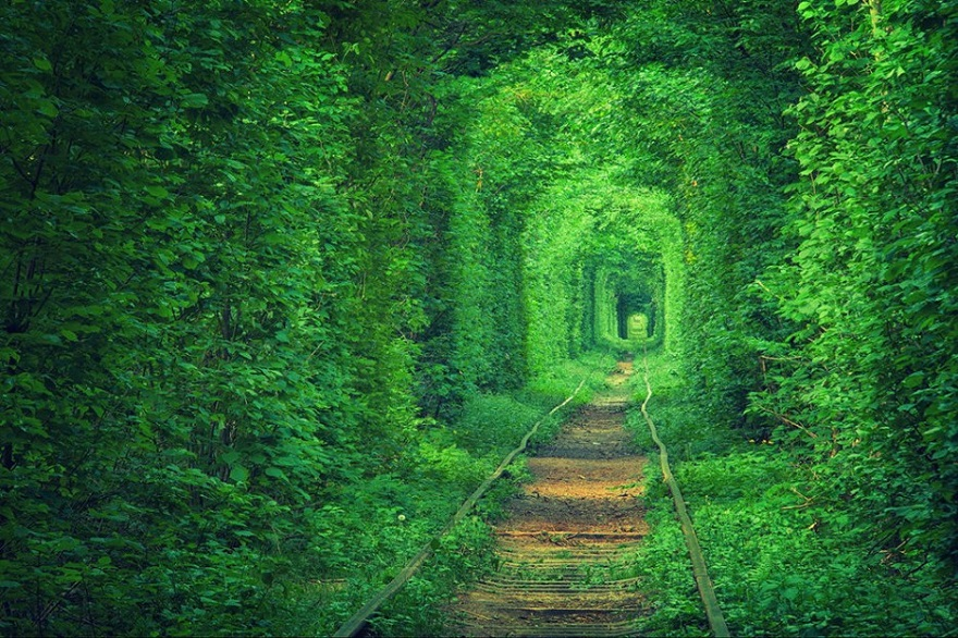 AD-The-34-Most-Beautifu-Forests-In-The-World-12