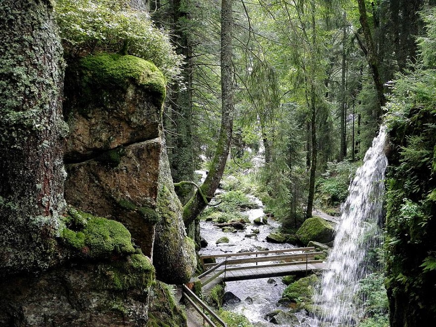 AD-The-34-Most-Beautifu-Forests-In-The-World-25