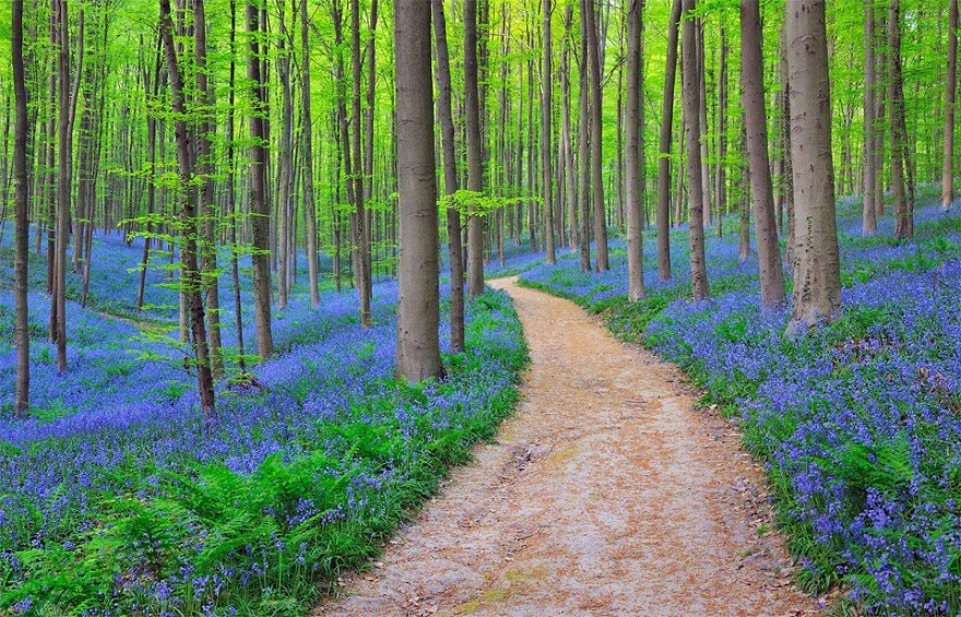 AD-The-34-Most-Beautifu-Forests-In-The-World-26