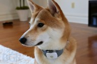 Tagg Pet Tracker Review - Image 2 of 11