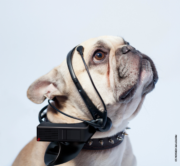 No More Woof Dog Talking Indiegogo Project