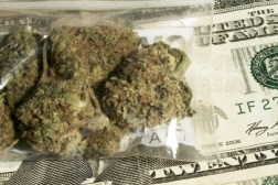 DEA Marijuana Legalization Rabbits
