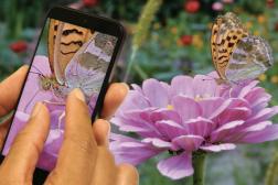 Best Smartphone Cameras OmniVision