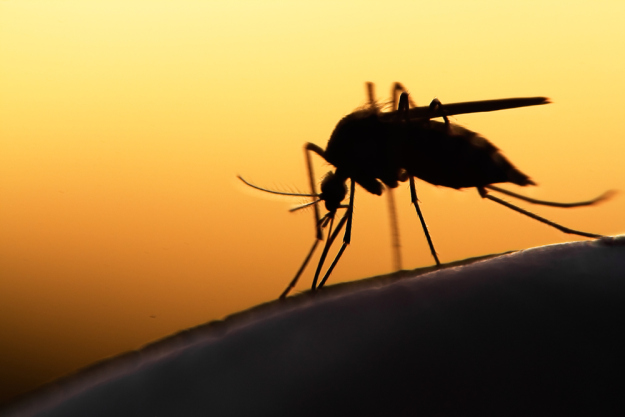 FDA approves genetically modified mosquitoes to test in fight against Zika virus