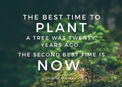 Today Is the Best Time to Plant Your Influence Tree
