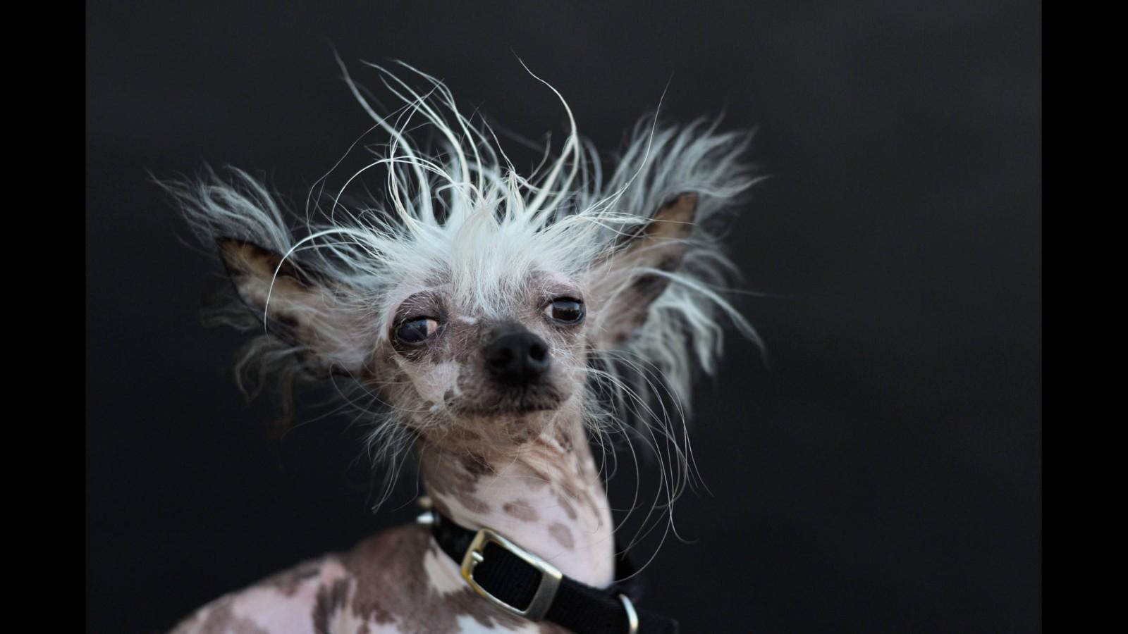 Fullsize Of Ugly Dog Breeds