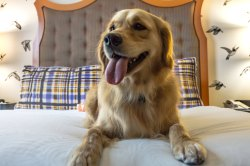 Small Of Hotels That Allow Dogs