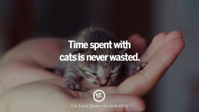25 Cute Cat Images With Quotes For Crazy Cat Ladies, Gentlemen And Lovers