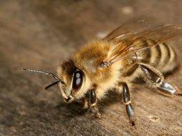 Beehive Sensors