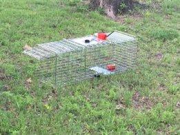 OpenTrap Smart Animal Trap