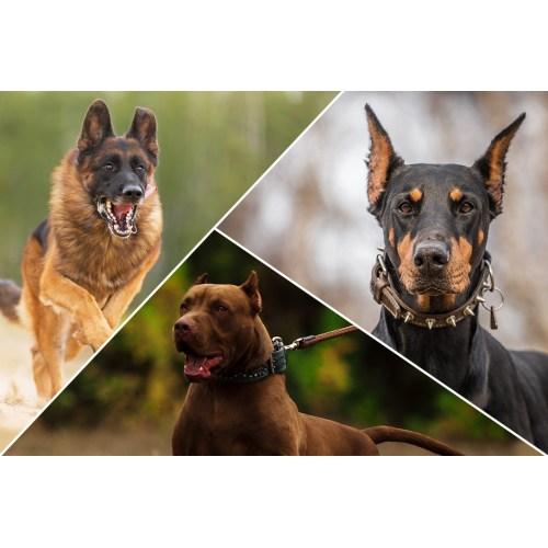 Medium Crop Of Calm Dog Breeds