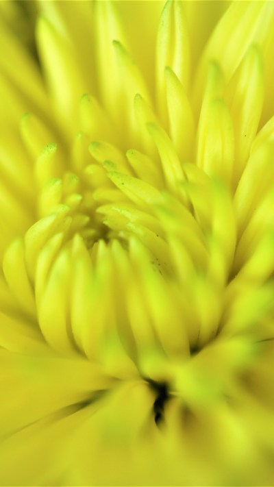 Happy Yellow Flower iPhone Wallpaper - iDrop News