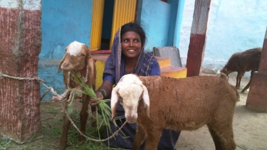 BhagyaAmma, a Madiga Dalit woman and former 'devadasi' (temple slave), has found economic self-reliance by rearing goats in the Nagenhalli village in the Southwest Indian state of Karnataka. Credit: Stella Paul/IPS