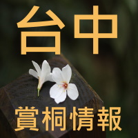 台中油桐花季介紹_sp