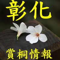彰化油桐花季時間、景點步道_sp
