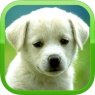 IOS限時免費軟體APP-Cute Puppies Wallpapers & Backgrounds 3