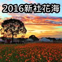 2016 新社花海