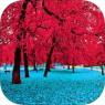 iOS限免、限時免費軟體遊戲APP-Beautiful Nature Wallpapers 3