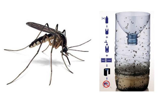 【驅蚊妙招】推薦10除蚊方法!防蚊 植物、貼片、門簾、精油、肥皂水、防蚊液14