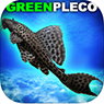 GreenPleco-ps