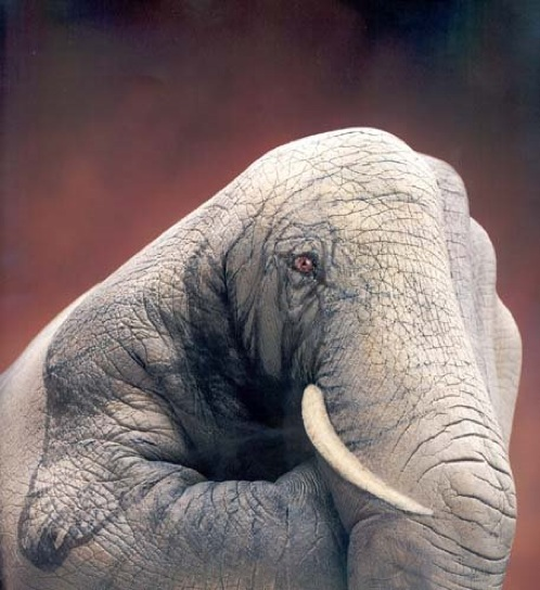 Schroeders-Elefante