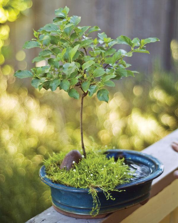 checkin-in-brookeylnn-bonsai.jpg
