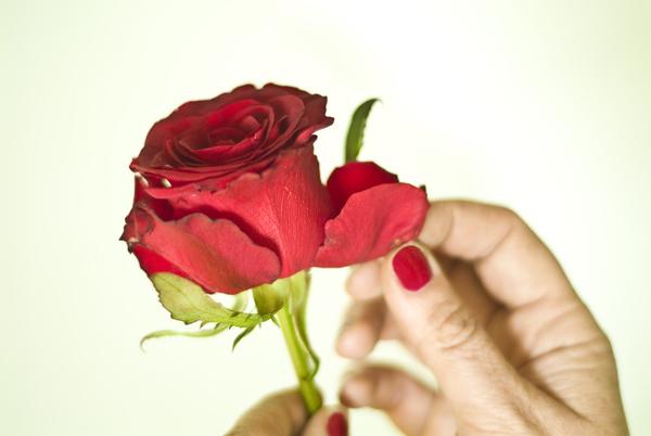 flowerprep_002.jpg
