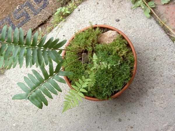 Rachelniles Plants