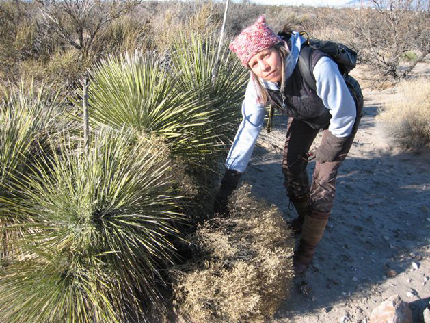 Livingmedchest Wendy Yucca