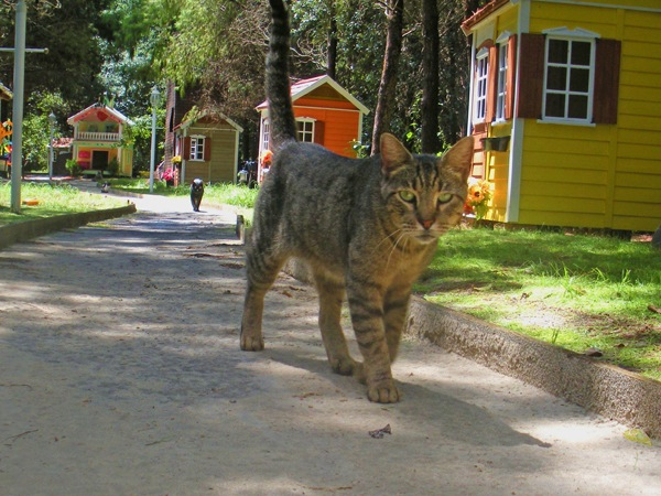 cat-village.jpg