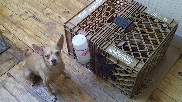 rabbit_cage2.jpg