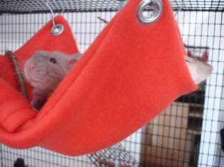 pet_hammock.jpg